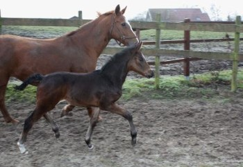 Filly by Rock Forever
